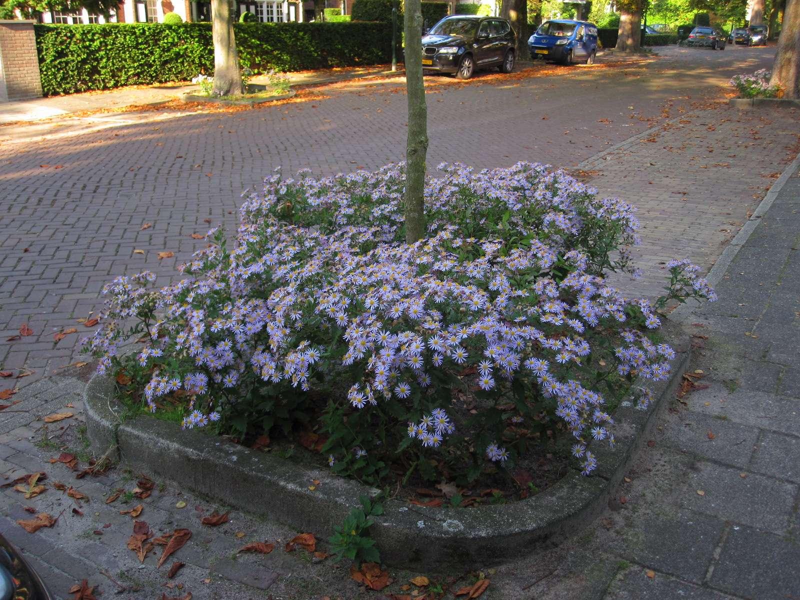 bloemenalbertlaan1